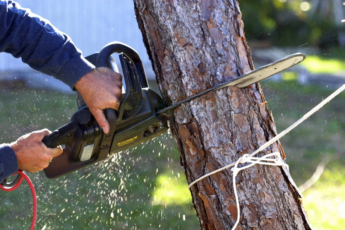 Reputable Stump Grinding Serving West Bloomfield MI | Big Guys Tree Service - iStock_000000378091_Large