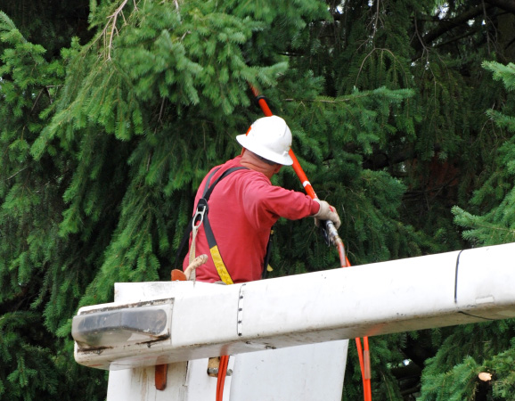Emergency Lot Clearing Around Waterford MI | Big Guys Tree Service - iStock_000016548621_Small
