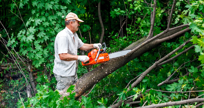 Professional Storm Damage Tree Removal In Milford MI | Big Guys Tree Service - iStock_000067819775_Small