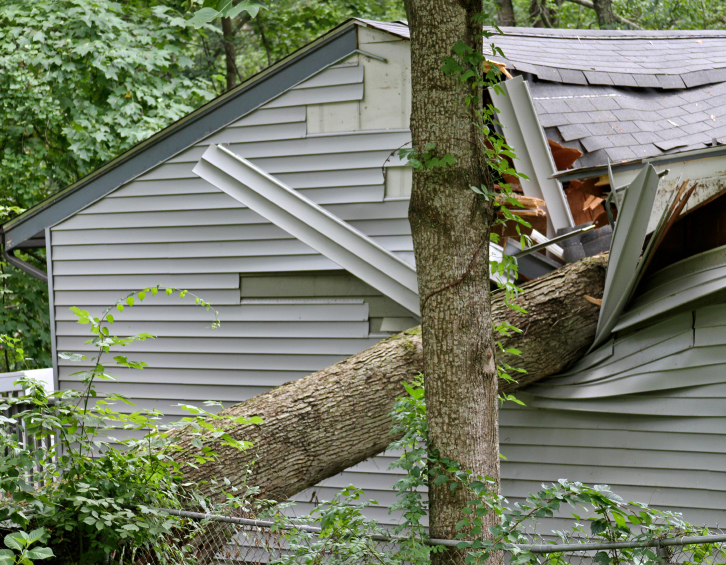 Affordable Storm Damage Tree Removal In Waterford MI | Big Guys Tree Service - iStock_000070234923_Small