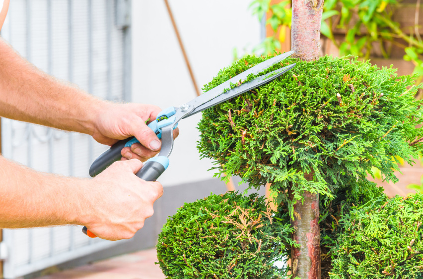 Reputable Tree Trimming Around Milford MI | Big Guys Tree Service - iStock_000078630561_Small