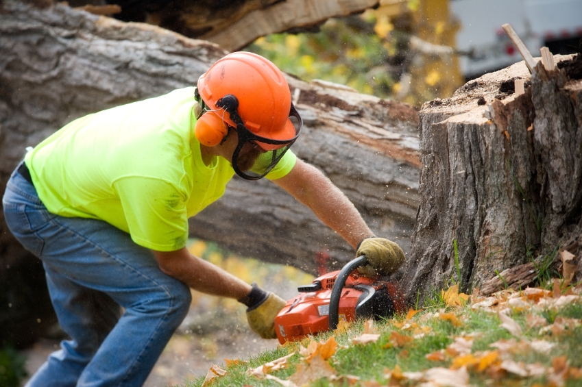 Affordable Land Clearing Around Fenton MI | Big Guys Tree Service - tree_cutting_iStock_000015672133Small