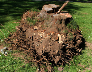 Affordable Lot Clearing Around Fenton MI | Big Guys Tree Service - uprooted_iStock_000000713978XSmall